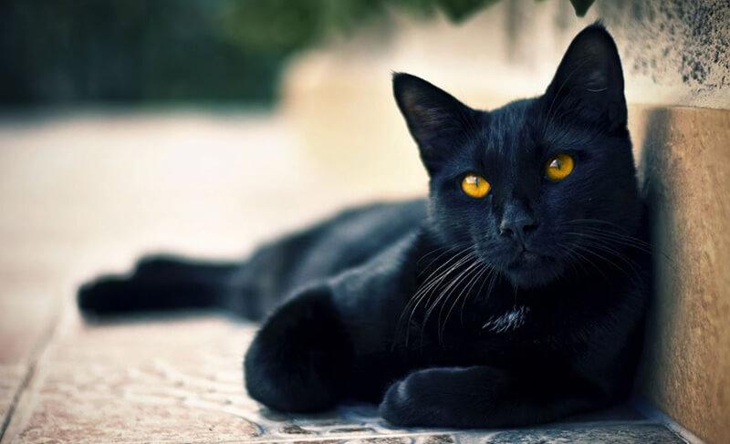 """""""Quỷ nhập tràng"""" – Mèo nhảy qua xác chết và những bí ẩn được hé lộ"""