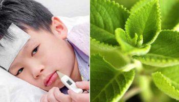 5 cây thuốc hạ sốt cho bé an toàn, nhanh chóng mẹ nên biết