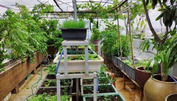"""Có """"soái ca"""" nào trồng được vườn sân thượng 30m2 rau luôn tươi tốt thế này không?"""