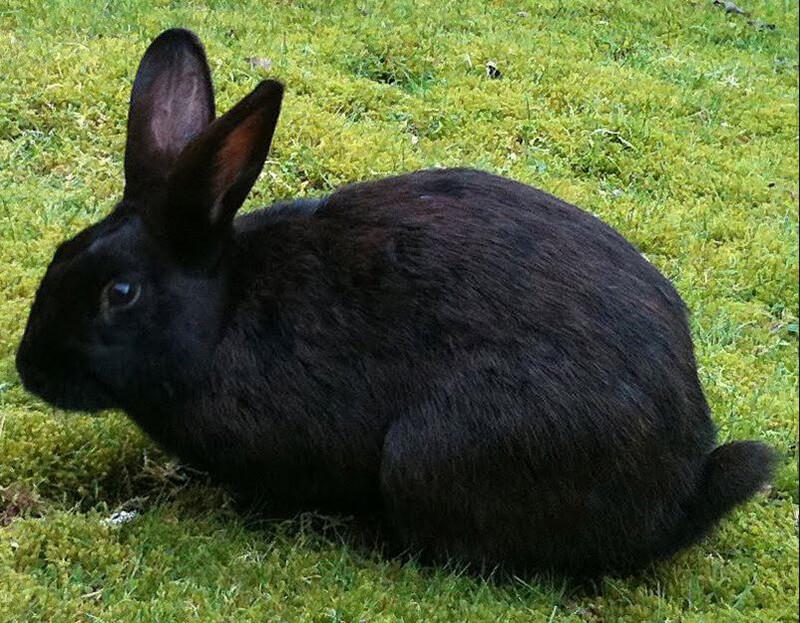 Giải mã giấc mơ nằm mơ thấy thỏ là điềm dữ