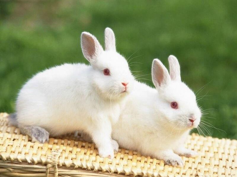Giải mã giấc mơ nằm mơ thấy thỏ là điềm lành