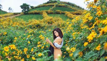 Những địa điểm ngắm hoa dã quỳ đẹp ngây ngất