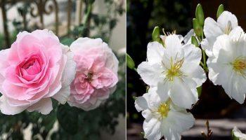 Những loại hoa nào là biểu tượng của 12 con giáp
