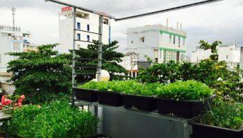 Những lưu ý cần nhớ giúp vườn rau sân thượng an toàn sau cơn bão
