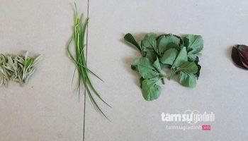 Bài thuốc đơn giản từ cây cỏ giúp hóa giải mọi loại ung nhọt