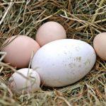 Dinh dưỡng của trứng ngỗng và bất ngờ về loại trứng tốt nhất cho bà bầu, trẻ nhỏ