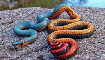 Giải mã giấc mơ: Mơ thấy rắn báo hiệu điềm gì?