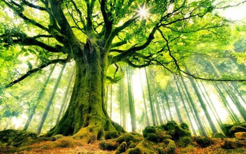 Giải mã giấc mơ thấy cây cối