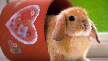 Giải mã giấc mơ thấy thỏ