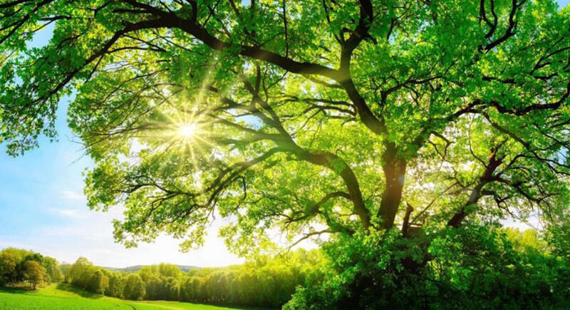 Mơ thấy cây có cành lá đầy đủ