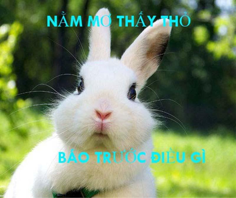 nằm mơ thấy thỏ