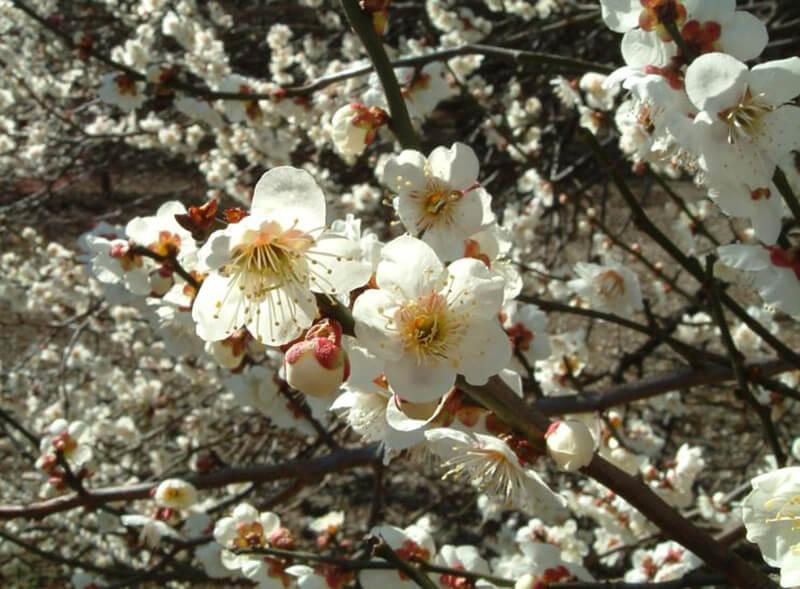 Mơ thấy cây cối mọc xung quanh nhà và đơm hoa kết trái