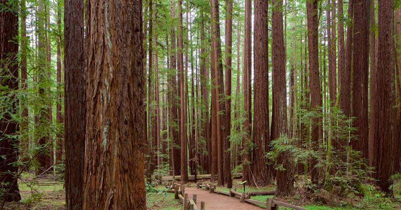Nằm mơ thấy thân cây